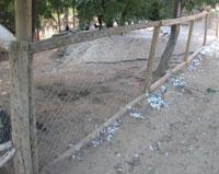 Chupacabras Atacó Zoo