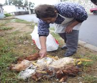 Chupacabras Atacó en Viña